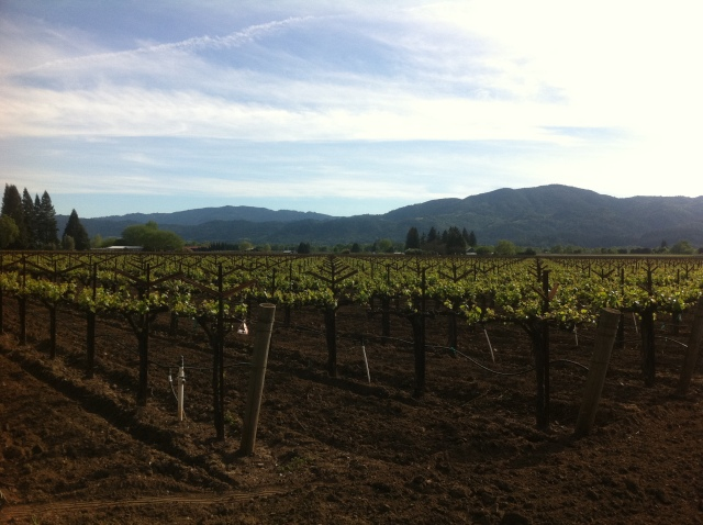 Rutherford, Napa Valley