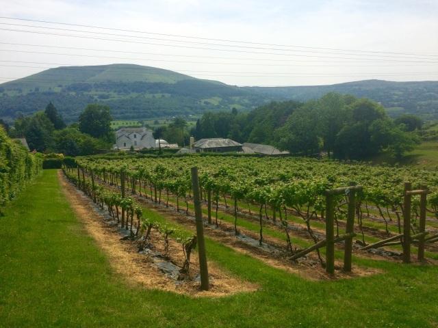 Sugarloaf Vineyards, Y Fenni